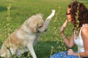 adestrar_cachorro