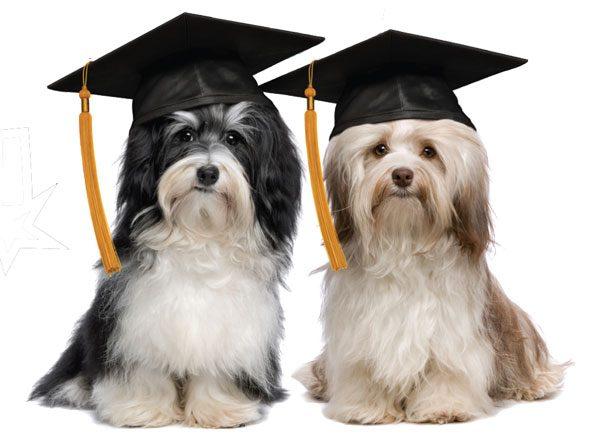 Cinco dicas para você adestrar o seu cão.