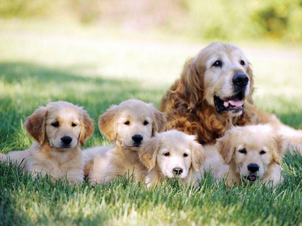 Dicas para Saúde Do Cachorro