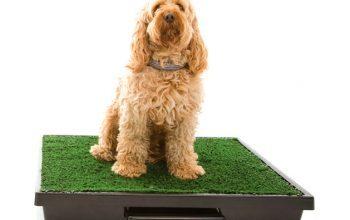 Dicas para o seu cão fazer xixi e coco nos lugares certos.
