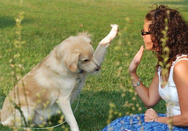 Treinamento de Cães BH