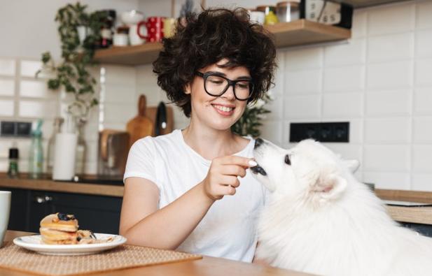 o que cachorro não pode comer
