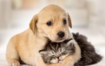 Quando começar a dar ração para filhotes de gatos e cachorros